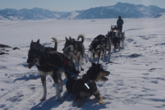 2011 Arctic