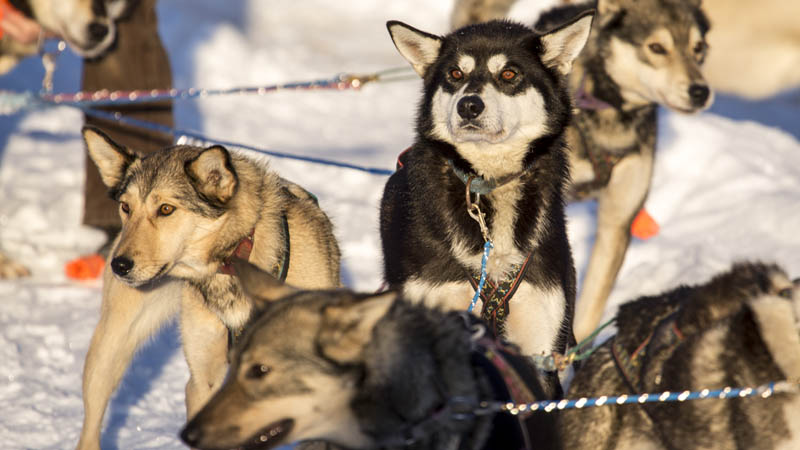 pups on line
