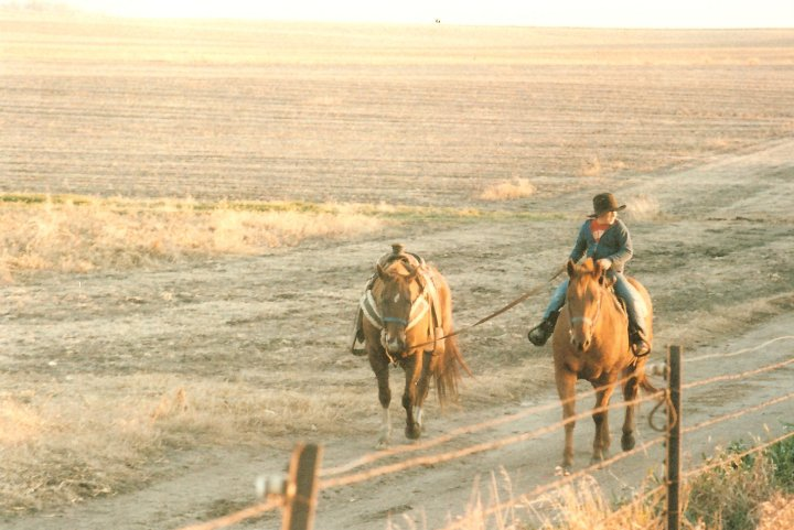 cody horses