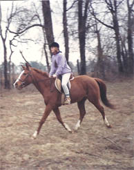 paige horse