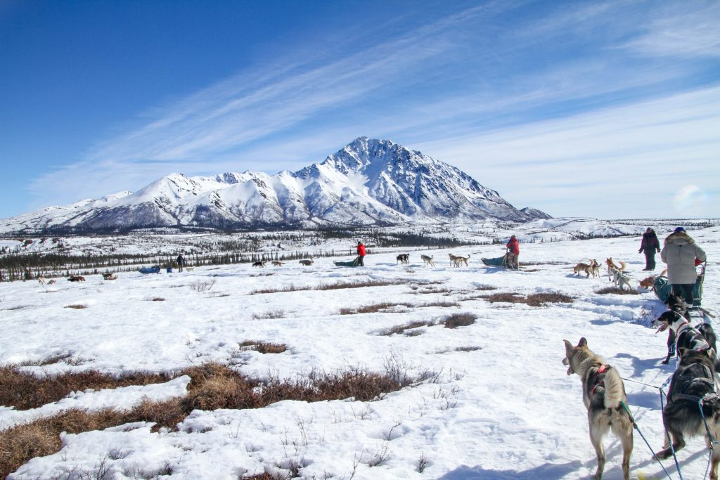 Dogsled expedition near Denali